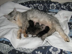 Katie with her newborn kittens on 22nd June 2010