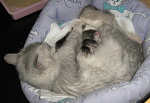 Katie and her kittens tucked up in their basket
