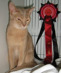 Abyssinian winning at the Wyvern show