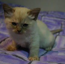 Kitten 4 aged 6 weeks