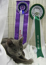 Xaria with her rosettes at the Ulster show