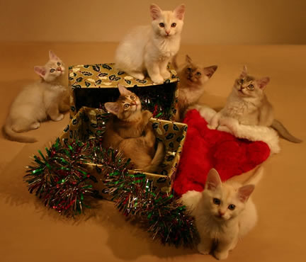 Our Christmas card image 2010 - the six kittens