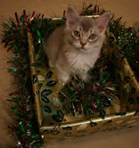 Ben in a tinsel-filled box