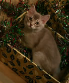 Ben in a box filled with tinsel