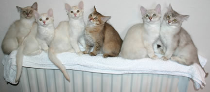 The kittens sitting on top of the radiator