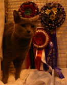 Xaria with her Imperial & Best of Breed rosettes
