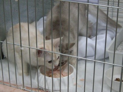 The kittens eating breakfast at the show