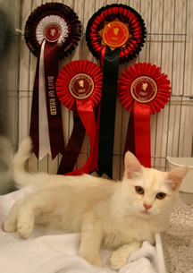Fiona relaxing in her pen at the Scottish show 2011