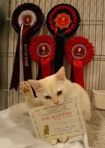 Fiona playing with her Best in Show nomination card