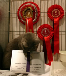 Xaria examining her Imperial certificate at the Scottish show 2011