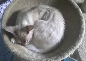 Ghost curled up asleep