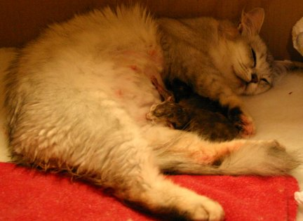Katie asleep with her kittens