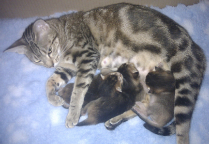 Kia feeding her kittens