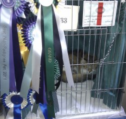 Jinny disappearing behind her rosettes