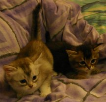 Katie's kittens together