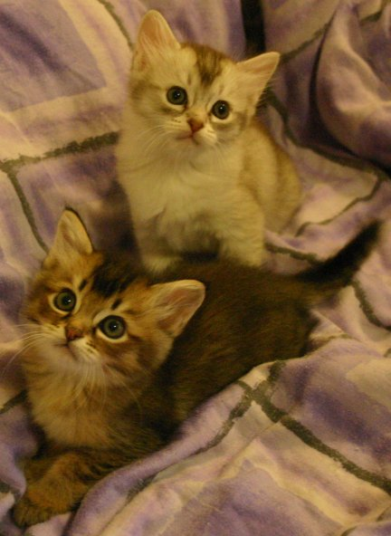Katie's kittens posing together