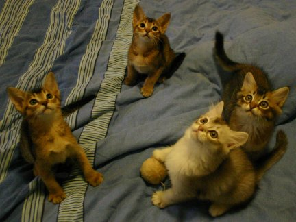Four of the kittens together