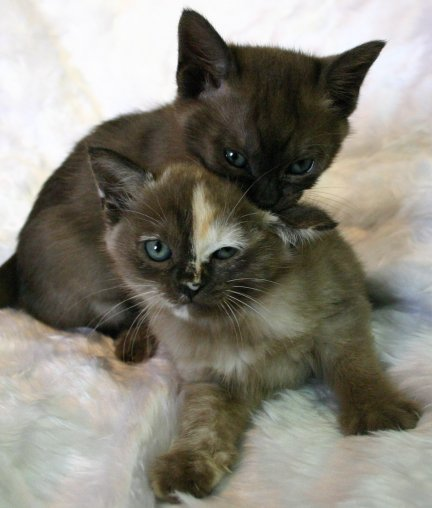 Both kittens together