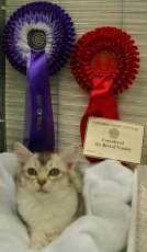 Cailin in her pen with her rosettes
