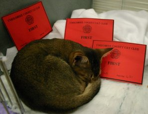Grace sleeping amongst her prize cards