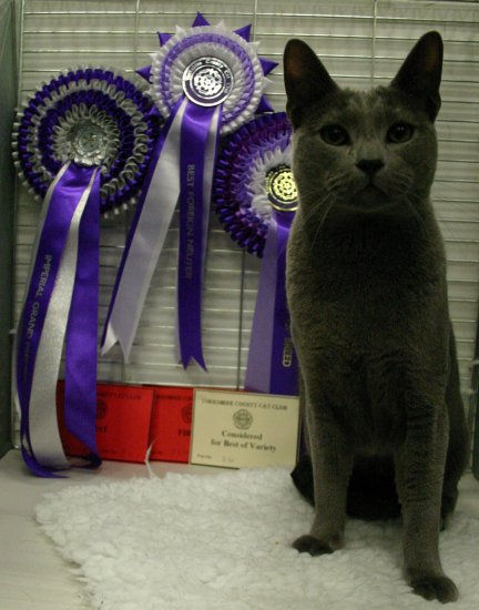 Zach looking handsome with his rosettes and prize cards