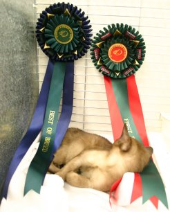 Donny examining his rosettes