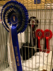 Annas in amongst her rosettes