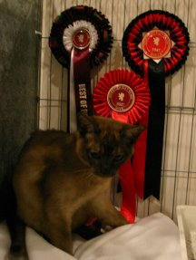 Donny with his rosettes