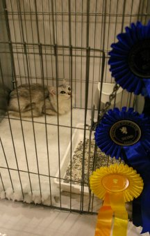 Lainni in her pen at the Scottish