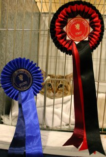 Shogun peering out from behind his rosettes