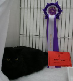 Annas with her Best of Breed and side class 1st