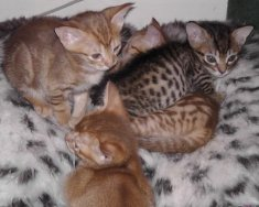 Four of Grace's kittens
