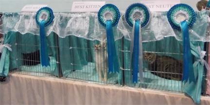 The Best in Show pens with occupants - Ayla is being nosy as usual!