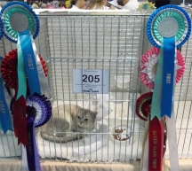 Tia in her pen with rows of rosettes