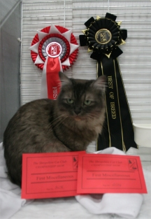 Lhasa with her prize cards