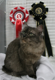 Lhasa with her rosettes