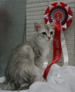 Tilly with her rosette