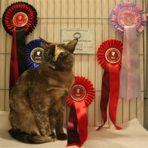 Quinn with her rosettes and prize card