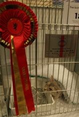 Tabh peering out beside his Grand certificate and rosette