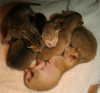 The six kittens piled up