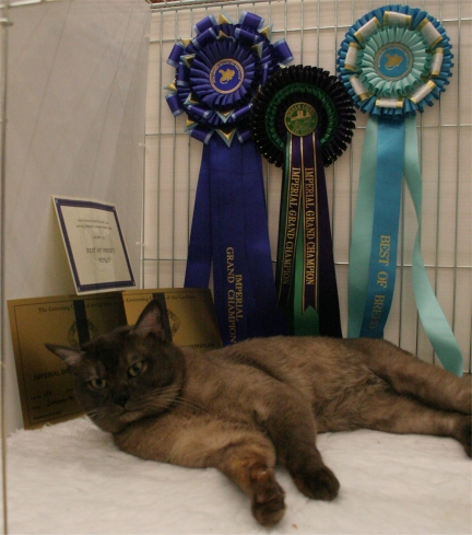 Donny posing beautifully with his rosettes, certificates and Best of Variety card