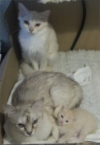 The kitten with her mum and granny at 22 days