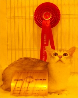 Tilly sitting in her pen, with her certificate and rosette, pulling a silly face