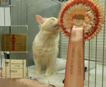 Eiteag standing in his pen doorway kissing his Grand rosette