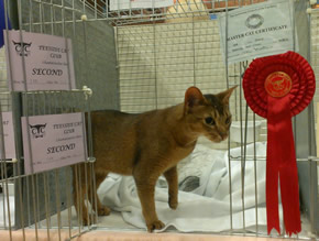Grace standing in her pen doorway, with her prize cards and rosette pinned to either side of the door
