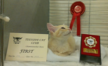 Small sitting between her Best of Breed medal and First prize card