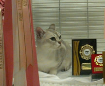 Tia sitting in her pen beside her Best of Vareity and Best of Breed awards