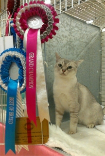 Tia looking lovely, sitting in her pen with her rosettes and certificate on the door