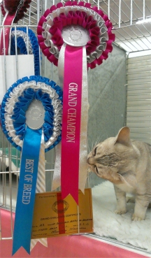 Tia studiously examining the tails of her Grand rosette