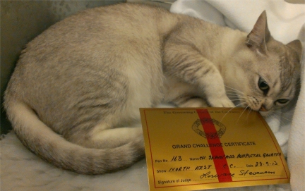 Tia lying curled up in her pen, with her Grand certificate laid in front of her, while she chews on its corner